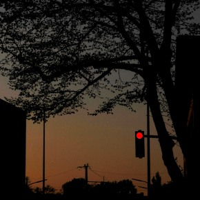 Tree and stoplight